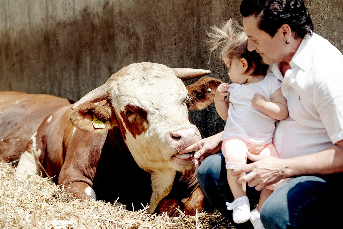 Rinder sind soziale Wesen